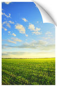 Sunrise over the field poster — Stock Photo