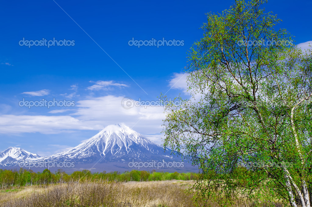 Volcanic landscape with a young tree in early spring, Kamchatka, Russia — Stock Photo #10952401