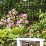 Stone Bench in Backyard Garden — Stock Photo
