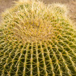 Stock Photo: Barrel Cactus with Thorns