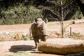 犀牛期待留下的日志 — 图库照片