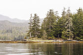 Evergreen Covered Point in Calm Water — Stock fotografie