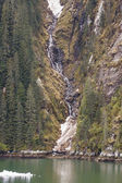 Stream Flowing Past Evergreens into Icy Fjord — ストック写真