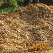Mulch Pile — Stock Photo