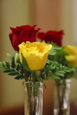 Yellow and Red Rose Bud Reflected in Mirror — Stock Photo