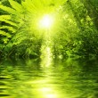 Tropical forest and river - Stock Photo