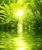Tropical forest and river — Stock Photo