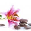 Pink lily and stones — Stock Photo