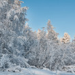 Winter snow-covered forest on the background of blue sky — Stock Photo