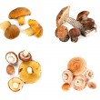 Different fungi decomposed into four piles — Stock Photo