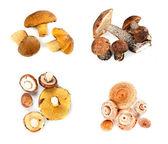 Diferentes hongos descompuestas en cuatro pilas — Foto de Stock