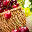Delicious sweet cherry fruits in wicker basket — Stock Photo #11379900