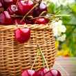 Delicious sweet cherry fruits in wicker basket — Stock Photo #11379961