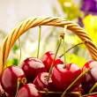 Delicious sweet cherry fruits in wicker basket — Stock Photo #11380020