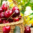 Delicious sweet cherry fruits in wicker basket — Stock Photo #11380077