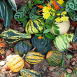 Gourds — Stock Photo #11393987