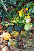 Gourds — Stock fotografie