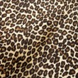 Stock Photo: Leopard hyde