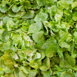 Green salad — Stock Photo #11518417