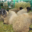 Sheep pen — Stock Photo