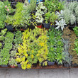 Nursery plants — Stock Photo