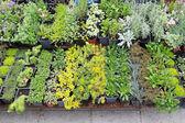 Plantas de viveiro — Foto Stock