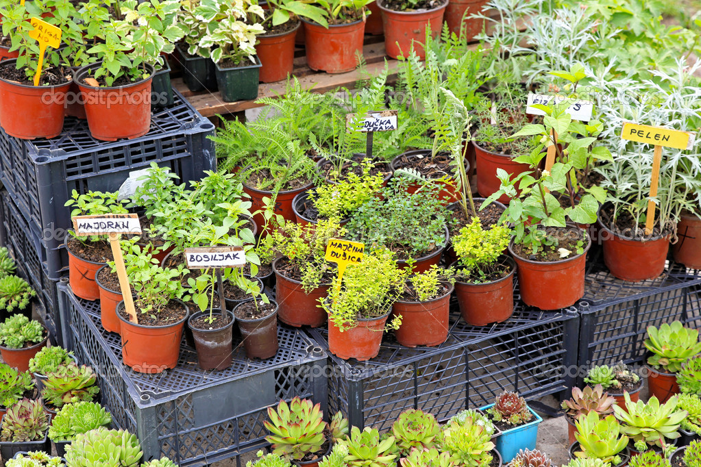 Natural edible plants and herbs in pots  Stock Photo #12324589