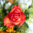Stock Photo: Orange Bouquet
