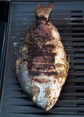 Gilthead Seabream on BBQ — Stock Photo