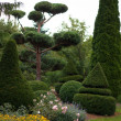 Garden Landscape. Topiary — Photo #11956945
