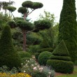 Garden Landscape. Topiary — Stock Photo