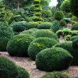 tuinlandschap. topiary — Stockfoto