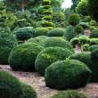庭の風景。トピアリー — ストック写真