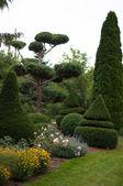 Garden Landscape. Topiary — Stock Photo