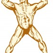 Male humanatomy body builder flexing muscle — Vector de stock #10816224