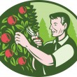 Horticulturist Farmer Pruning Fruit — Stockvektor