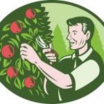 Horticulturist Farmer Pruning Fruit — Stock Vector