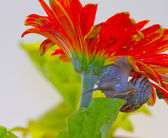 Snail on a flower — Stock Photo