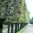 Peterhof Gardens — Stock Photo #11444144