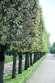Peterhof Gardens — Stock Photo
