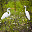 Bird Life In Kakadu National Park — Stock Photo #10787395