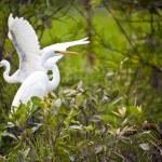 Bird Life In Kakadu National Park — Stock Photo #10787552
