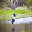 Bird Life In Kakadu National Park — Stock Photo #10787741