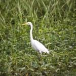Bird Life In Kakadu National Park — Stock Photo #10789408