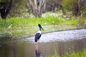 Bird Life In Kakadu National Park — Stock Photo