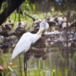 Bird Life In Kakadu National Park — Stock Photo #10791342