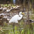 bird life in kakadu national park — Stock Photo