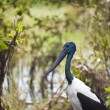 Bird Life In Kakadu National Park — Stock Photo #10792013