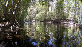 熱帯雨林 — ストック写真