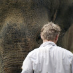 Elephant Love — Stock Photo #11607515